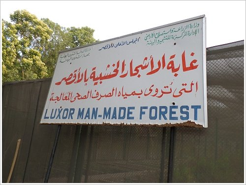 Luxor Man-Made Forest